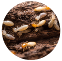 termite_baiting_system_icon