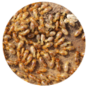 termiticide_icon